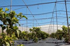 Invernadero ecologico Brahmavitta en Tenerife España